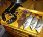 homard-dorade-calamar-peche-en-rance