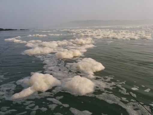 ecume de mer sur la Rance
