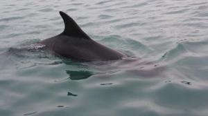 saint-suliac-un-groupe-de-dauphins-signale-dans-la-rance